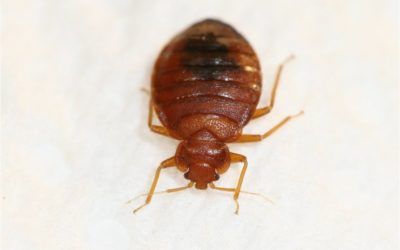 Freezing Bugs: How to Get Rid of Bed Bugs