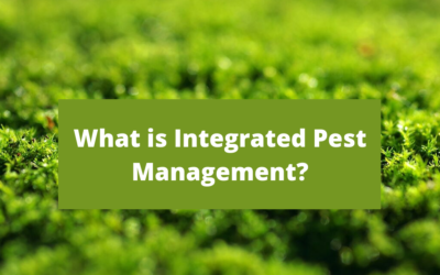 Integrated Pest Management: What is IPM?