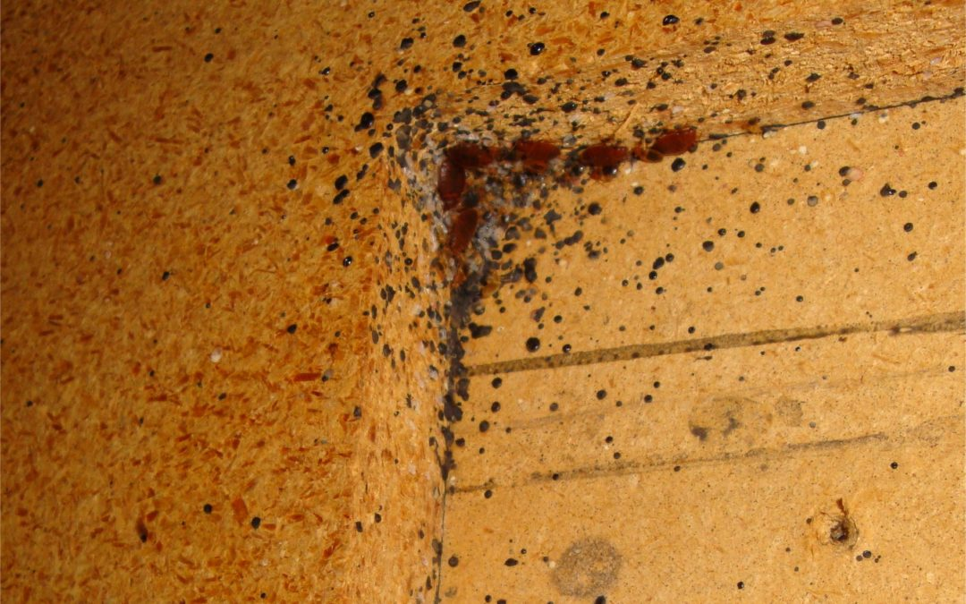 Signs of a Pest Infestation and How to Respond Immediately